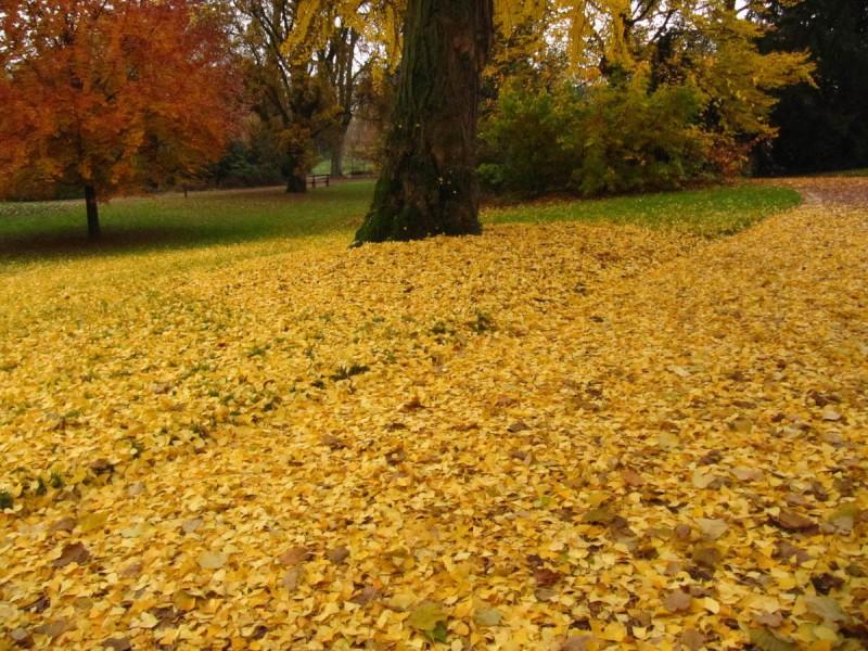 nancy automne foire pepiniere we love